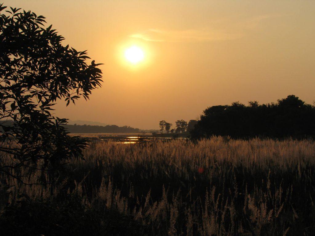 Chitwan Grasslands